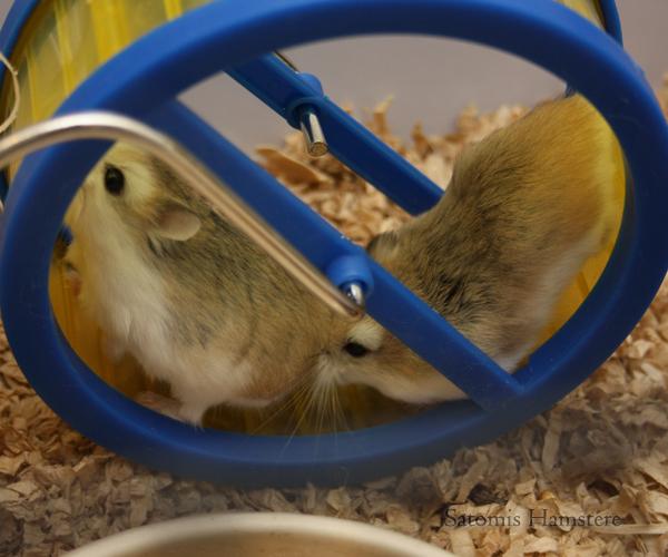 Pip og Sylvester